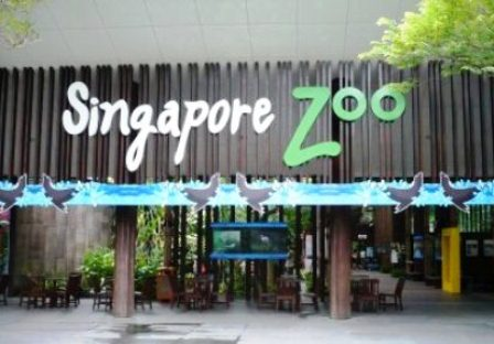 Singapore-Zoo.jpg